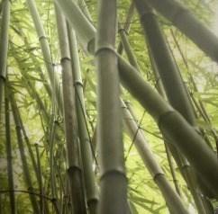 Außergewöhnliche Badideen mit Glastafeln in Digitaldruck mit einem Bambusmotiv
